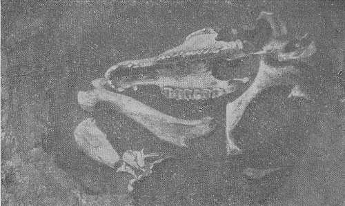 Яма с костями коня