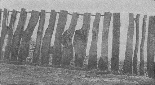 Забор из вертикальных плах в деревне Тигарево. Такой забор окружал древнее святилище